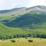 Fig.3 Monte Pizzo Deta da Prato di Campoli