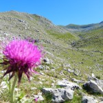 Le Pratelle. Bellissima area in falsopiano verso M. Fragara e M. del Passeggio. Vedi articoli di Geomorfologia.