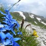 Monte Viglio con vista verso le Coste di M. Viglio (spettacolari Circhi Glaciali). Vedi articolo Geomorfologia.