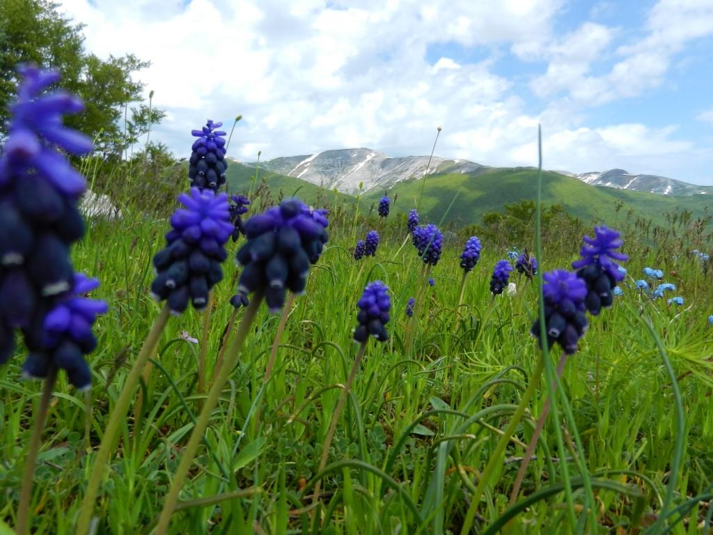 Monte Ginepro e Monte Fragara