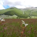 Prato di Campoli con M. delle Scalelle e Monte Fragara